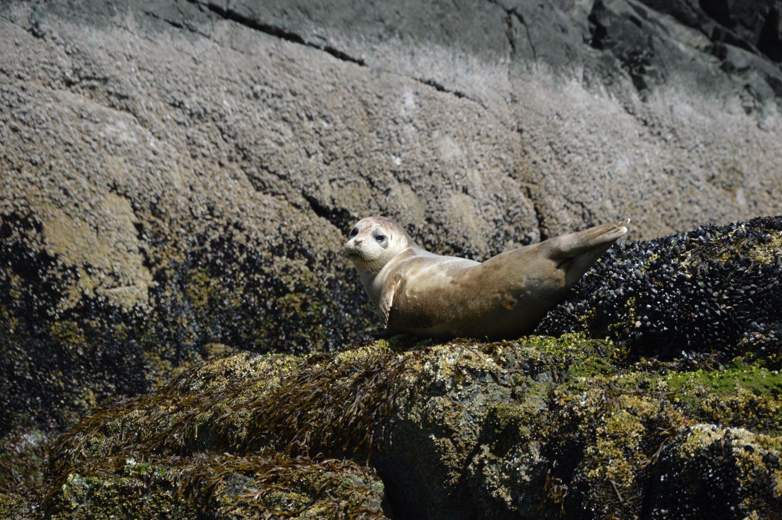 Tulen | Seal