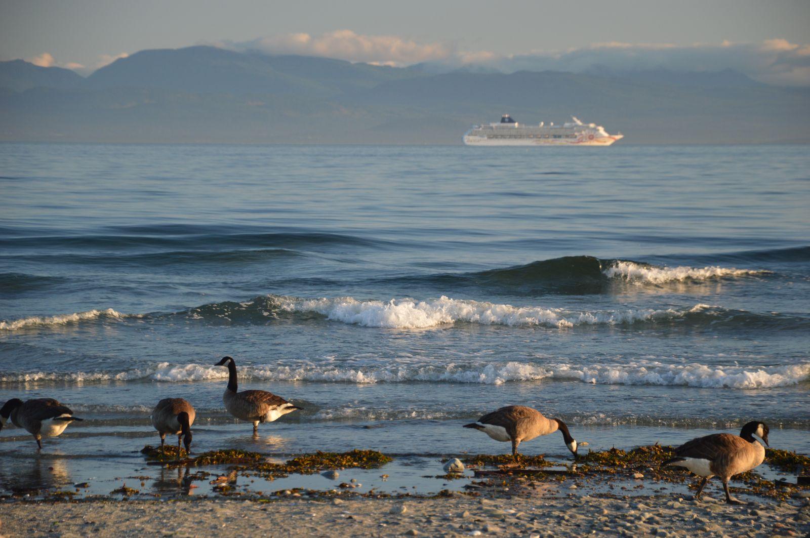 Zvierence | Ducks
